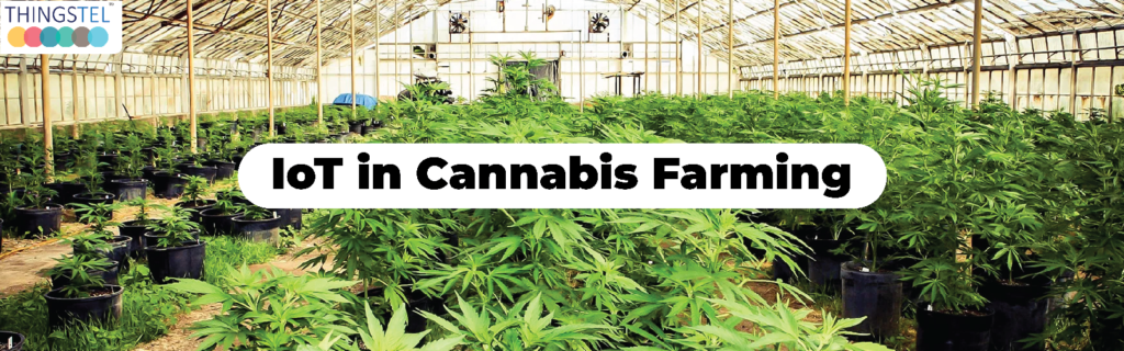 IoT in cannabis Farming